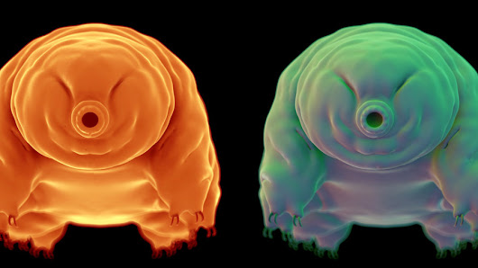 Science Reveals How the Tardigrade (aka Microscopic Rasputin) Survives Such Extreme Conditions