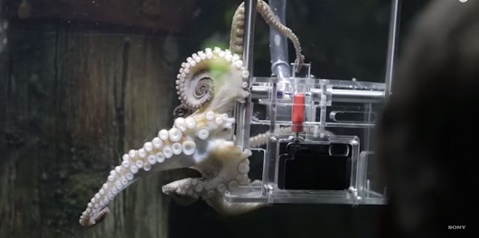 WATCH: An octopus in New Zealand is taking photos of its visitors