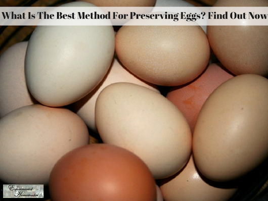 What Is The Best Method For Preserving Eggs Find Out Now!