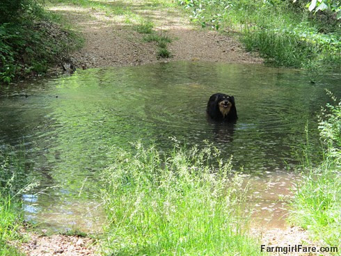 (29-1) Everybody knows Bears like the water - FarmgirlFare.com
