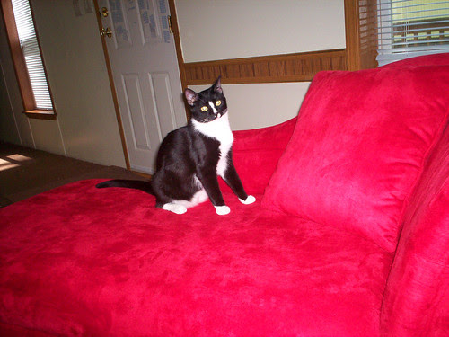 Friday claims his chaise