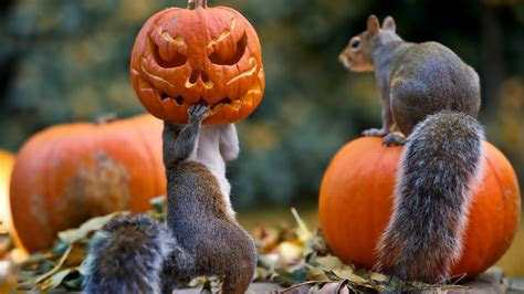 full hd wallpaper halloween forest squirrel jack