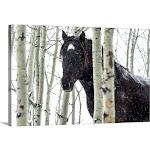 Wild horse in a snowstorm, Turner Valley, Alberta, Canada | Canvas Wall Art | 30x20 | Great Big Canvas