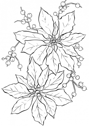 Poinsettia Flower Coloring Page Free Printable Coloring Pages