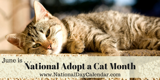 National Adopt A Cat Month In June,