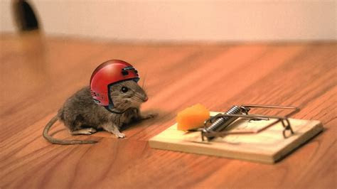 full hd wallpaper mouse trap helmet blurry background