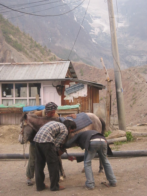 shoeing a pony outside the cinema in Manang