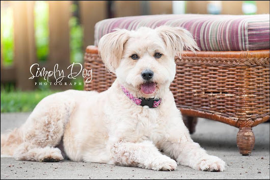 In Home Dog Photography Session | Columbus Ohio Dog Photographer