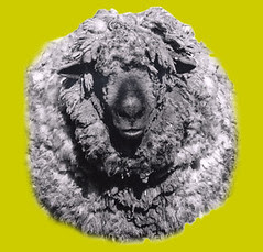sheepavatar