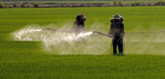 Study: Glyphosate Herbicide Associated with Greater Risk to ALS
