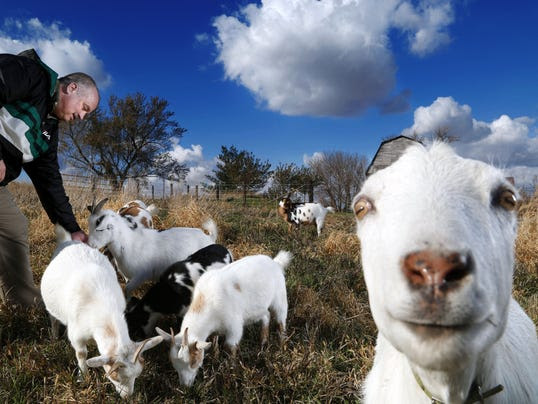Goats for Afghans