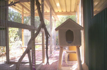 Enclosing Patio for Cats