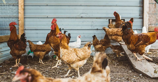 Don't Count Your Chickens: New Jersey Appellate Division Ruling May Come As A Surprise To Insurers And Business Law Attorneys