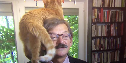 This serious political interview was derailed by a ginger cat