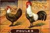poules 22