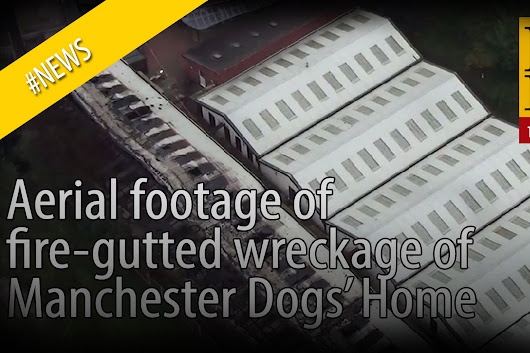 WATCH: Footage shows devastation after Manchester Dogs' Home fire