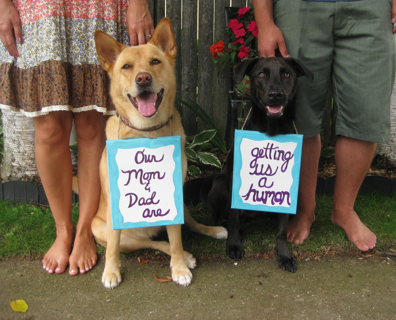 Were Adopting 42 Fun Ways To Celebrate Your Adoption Journey