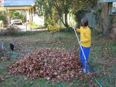 raking 1