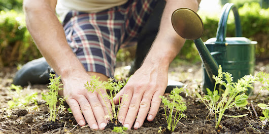 The Big Life Lesson We Can All Learn From Gardening