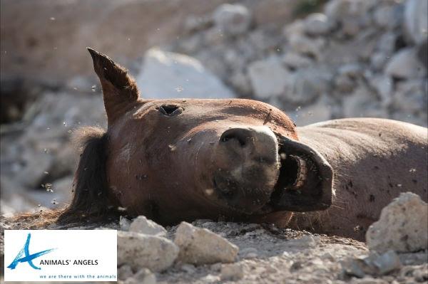 Horse carcass