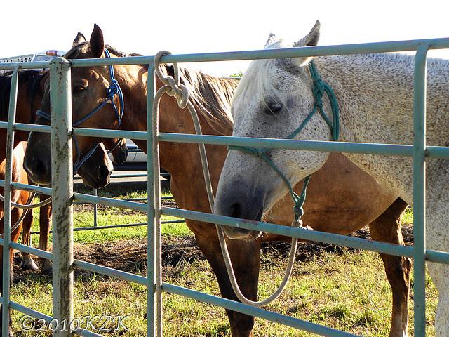 DSCN6096 Horses