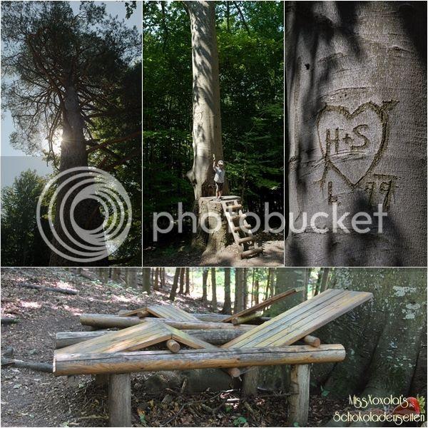 Naturpark Sparbach Baumriesen