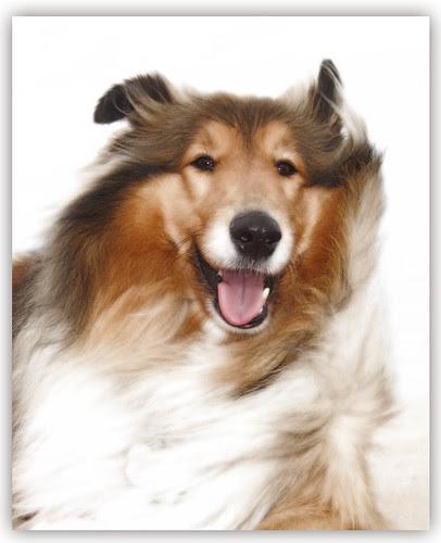 Glowing Lassie