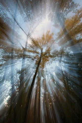 autumn-forest-rays