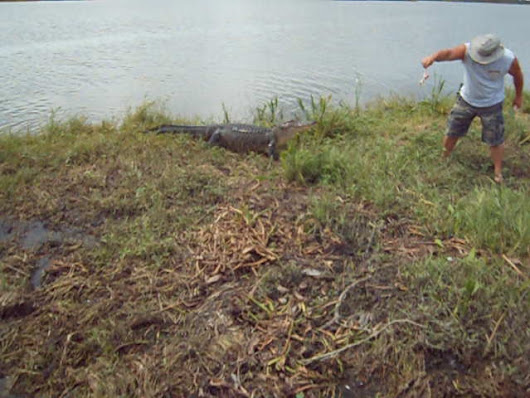 Feeding Alligators on the Bayou