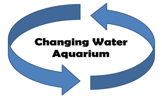 Changing The Water In Your Fish Tank
