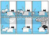 Miau 1