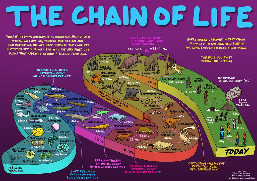 The Chain Of Life Your Evolutionary History You Are