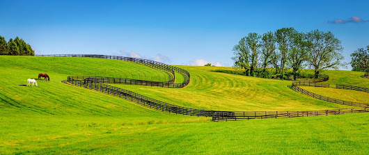 Things to Consider When Purchasing Equine Property - LandThink