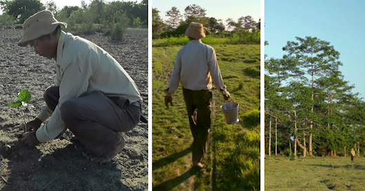 Since the 1970s a Man Has Been Planting a Forest Larger than Central Park, One Tree at a Time