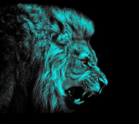 lion hd wallpaper background image  id