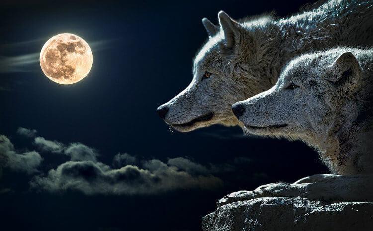 Significado Espiritual Del Lobo Místico Y Simbólico