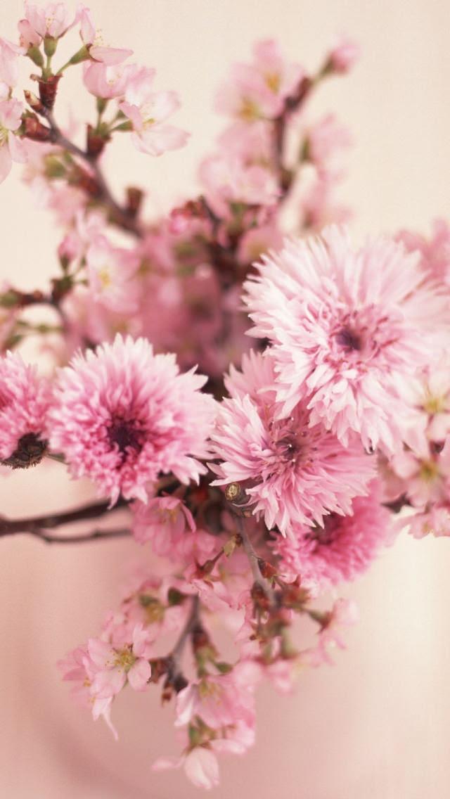 ピンクの綺麗な花 Iphone5 スマホ用壁紙 Wallpaperbox