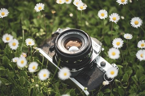 Best Film Cameras You Can Buy on the Cheap