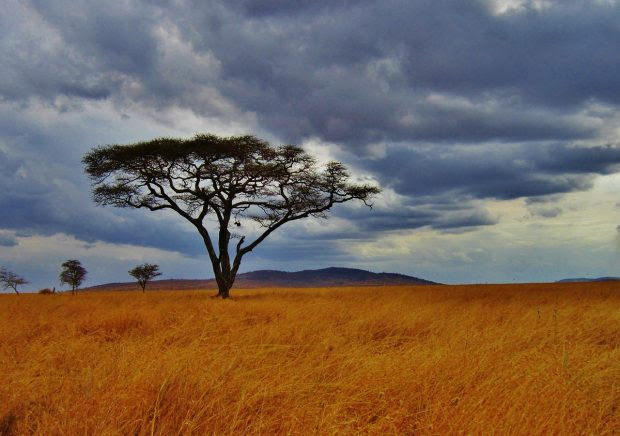 5 Things to know about a Serengeti Safari