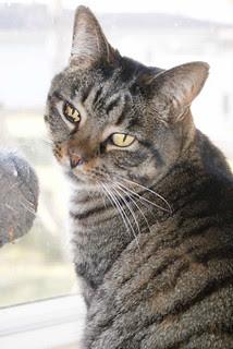 Sunporch Kitty Olaf