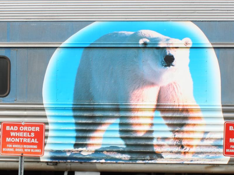 Polar Bear on VIA 2448 in Winnipeg