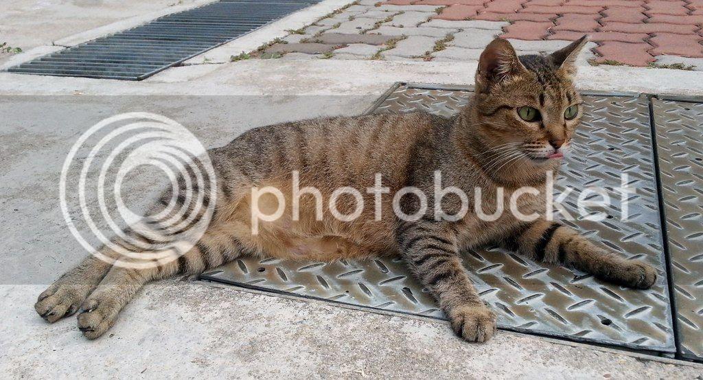 photo CatSimsP05.jpg
