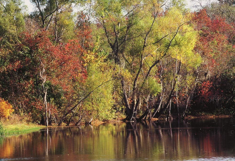 Columbia Bottomlands
