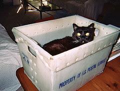 shipping my cat to abu dhabi