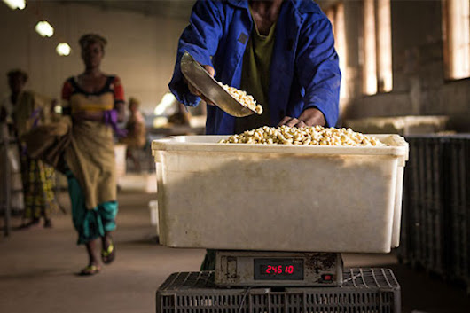 Creating Change for Mozambique Cashew Sector through Processing