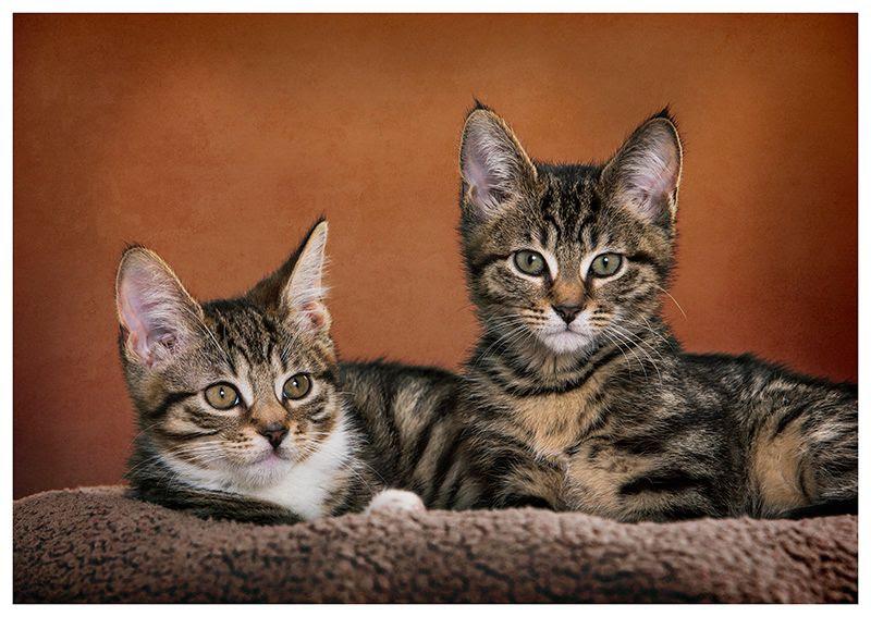 Pet photography photo Kitten photography_1.jpg