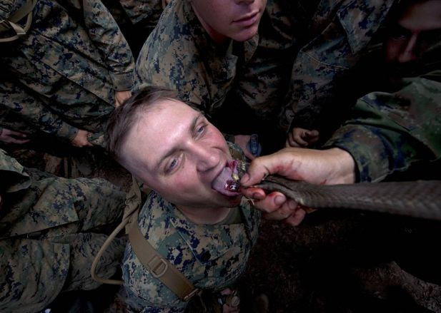 A US Marine drinks cobra blood during a jungle survival program as part of the annual Cobra Gold 2014 combined military exercise at a navy base in Chanthaburi province on February 15, 2014. About 8,000 military personnel from seven nations, South Korea, Indonesia, Thailand, US, Singapore, Japan and Malaysia are involved in the exercise.