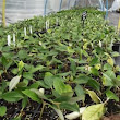 Trays of immature/small plants for sale at Trevena Cross