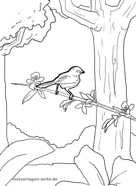 malvorlagen kostenlos vogel  kostenlose malvorlagen ideen