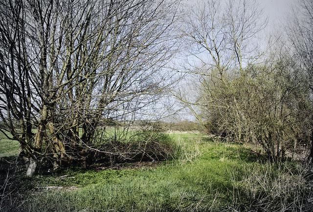 Open field along Hogsmill River near Tolworth
